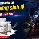 Vietnamnet – Tinh hàu biển – 'trợ thủ' của phái mạnh